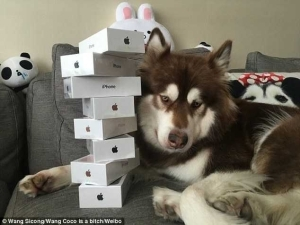 Meet Son Of Chinese Billionaire Who Bought Eight Iphone 7s For His Pet Dog (Photos)